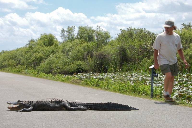 do not approach alligators